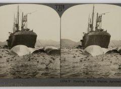 Hvalfangerbåt i Spitsbergen (ca 1910)