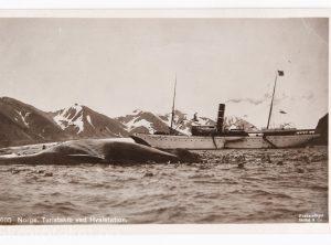 DS «Kong Harald» ved Hvalstasjon i Bell Sound, Spitsbergen – Anders Beer Wilse (1900)